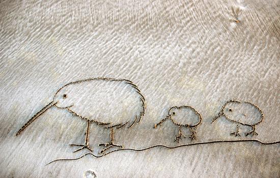 Kiwivogel mit Jungen Zeichnung im Sand
